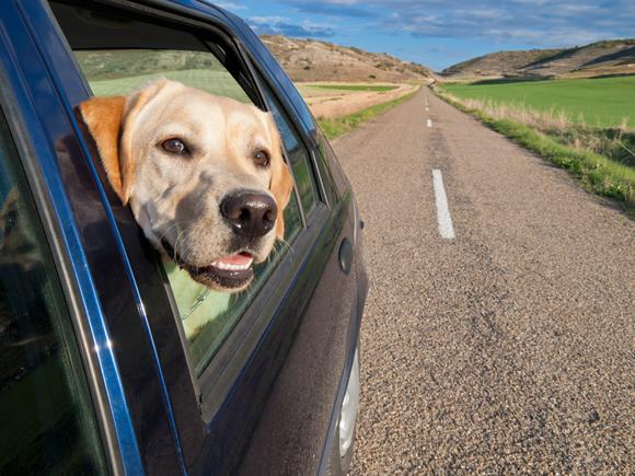 Mit dem Haustier nach Asien reisen: Was ist zu beachten
