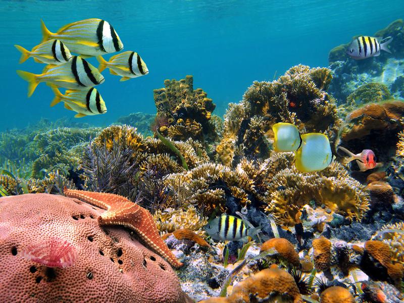Unterwasserwelt Bali