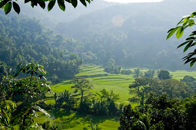 Landschaft Sri LankaLandschaft Sri Lanka