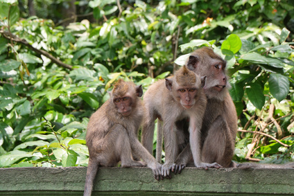 Monkey Forest in Ubud (Bali)