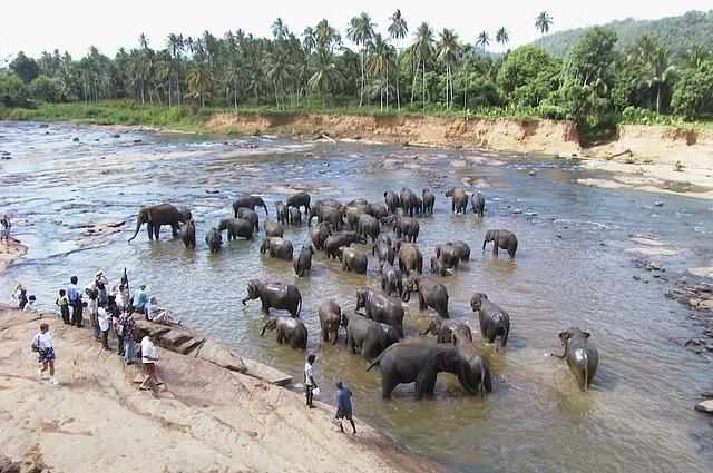 Sri Lanka, Elefanten im Fluss